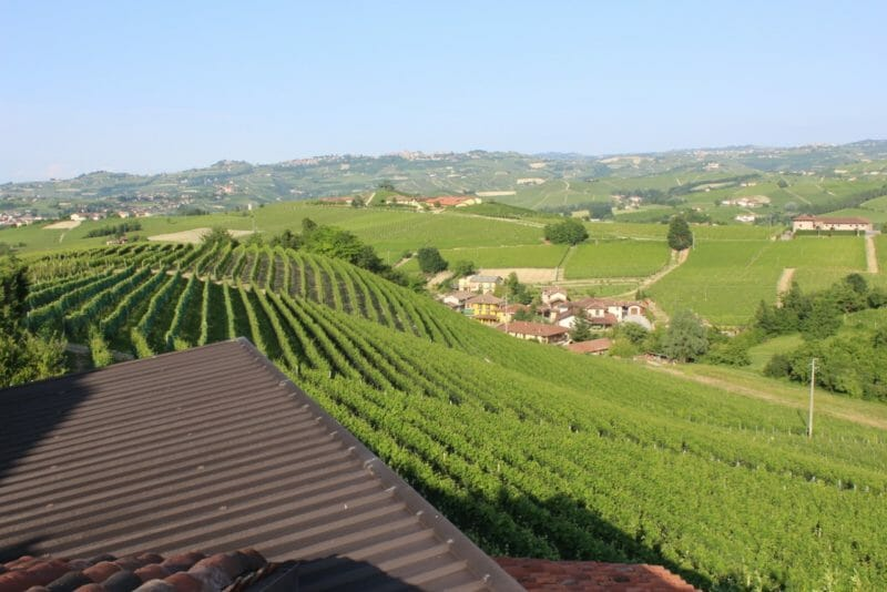 The slope of the Arborina cru from the Altare cantina