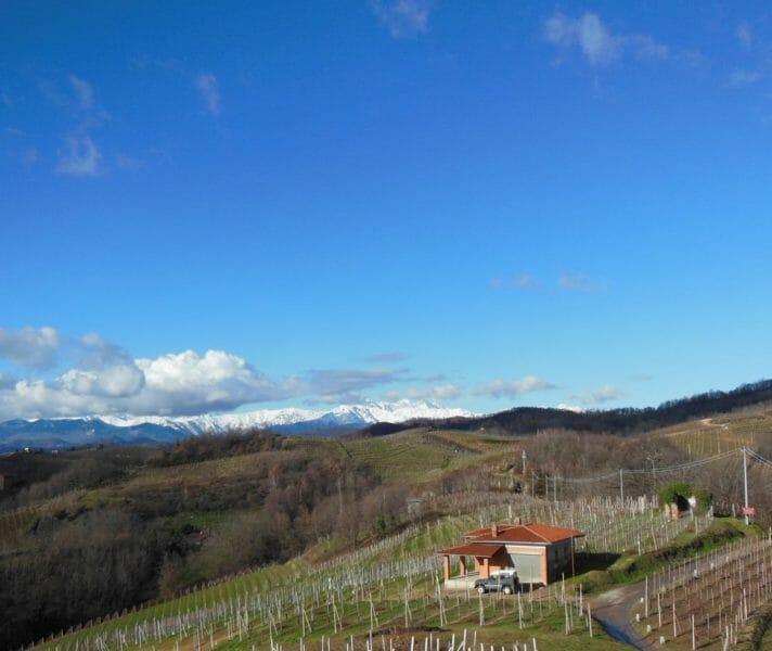 San Francesco vineyard