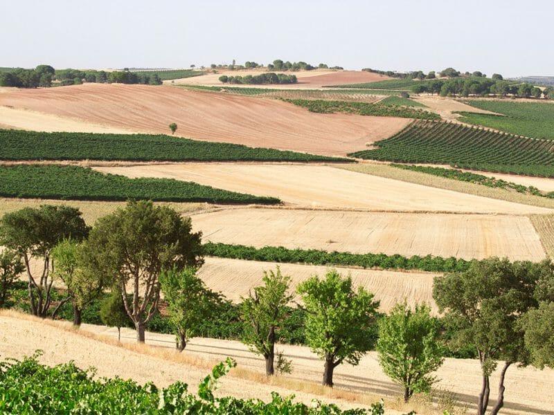 Ribera del Duero <br>Photo by Zoe Dehmer
