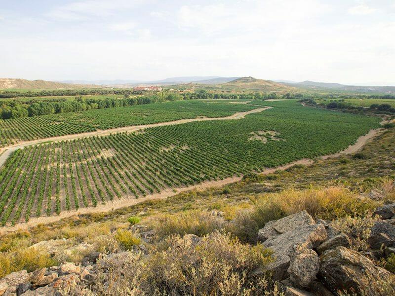 Orlegi vineyard <br>Photo by Zoe Dehmer