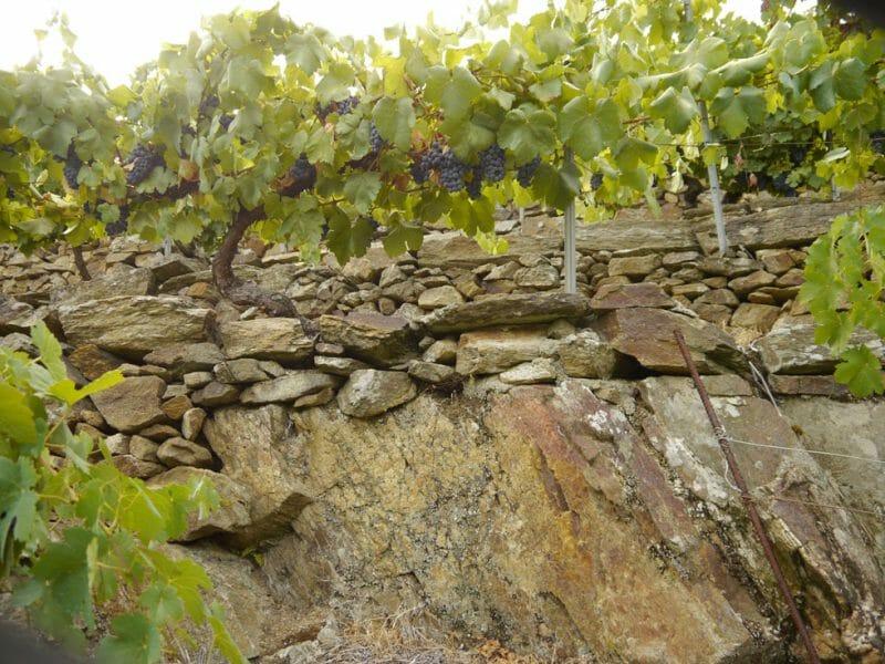 Terraced vines<br>Photo by Steven Alexander