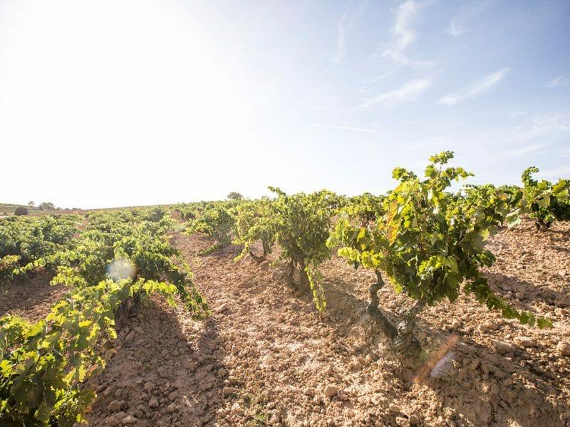 Valdelayegua vineyard <br>Photo by Zoe Dehmer