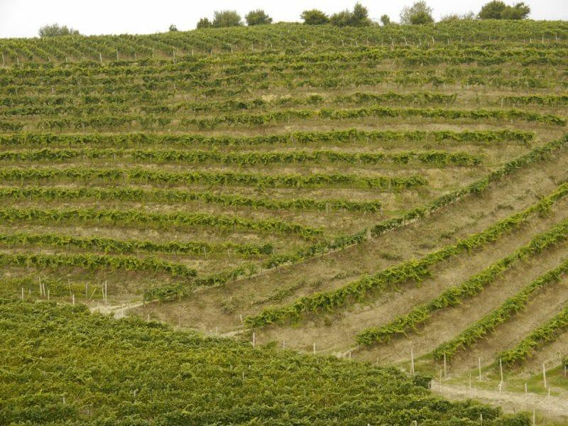 Vineyard <br>Photo by Steven Alexander