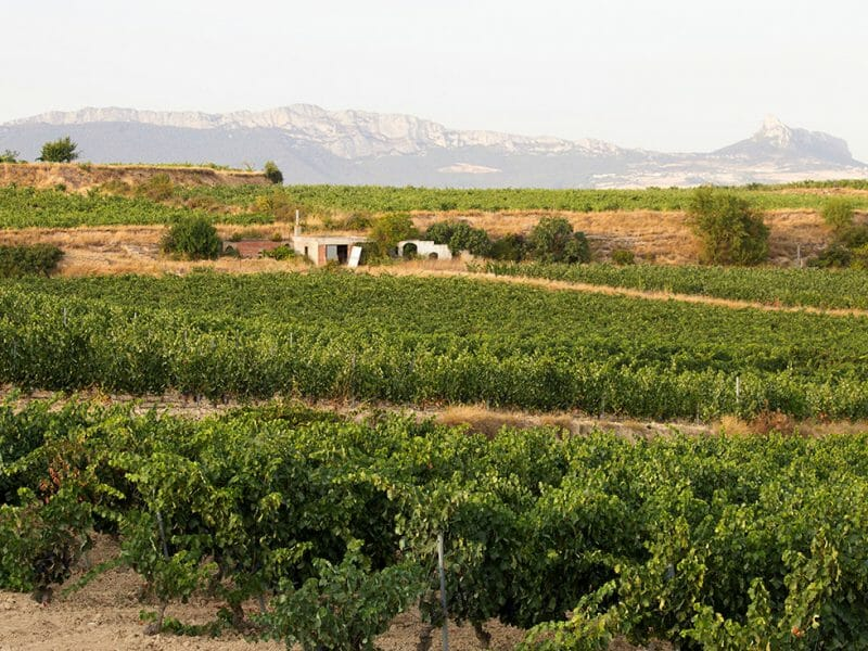 Vineyards <br>Photo by Zoe Dehmer