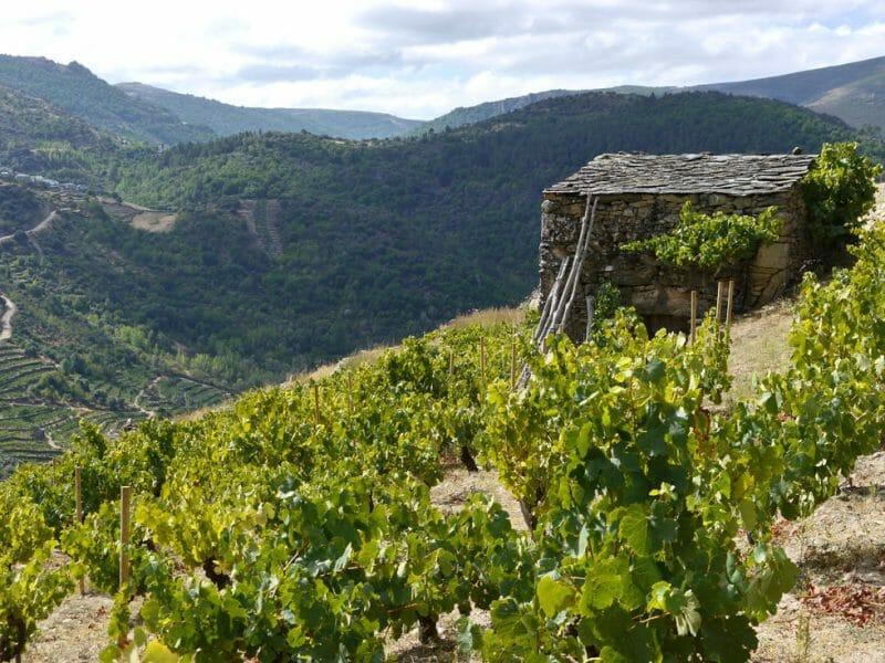Vineyards <br>Photo by Steven Alexander