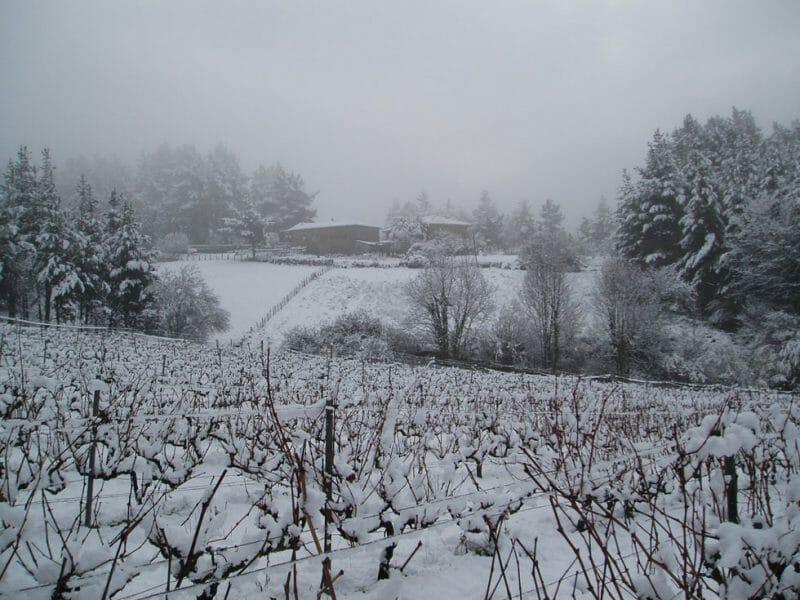 The bodega in winter